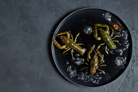Live crayfish on a plate of ice. Black background, top view, space for text