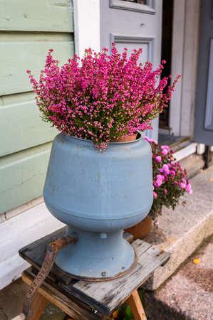 Erika roze in een rode pot op straat