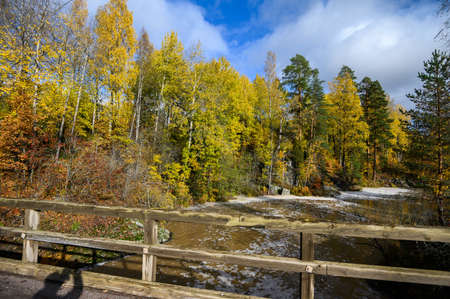 Autumn forest with yellow trees, river. Suburb Of Helsinki, Finland. 版權商用圖片