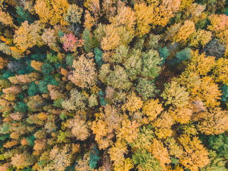 aerialphoto of coniferous and deciduous forests, pine, fir, fall. Northern landscape