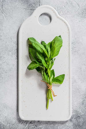 A sprig of Basil on a white background. Space for text. Seasoning for vegetables.