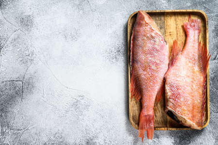Raw red sea bass. Gray background. Top view. Space for text.