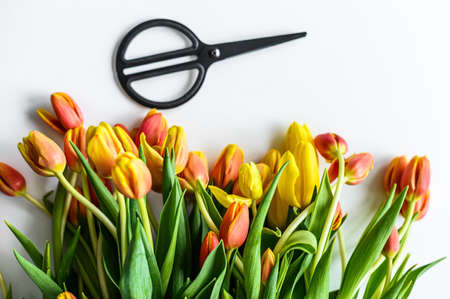 A beautiful bouquet of yellow, orange and red Tulips, the concept of flower care. White background. Top view. Copy space.