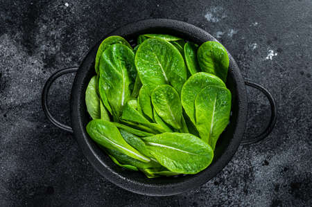 Raw leaves of romaine lettuce in colander. Black background. Top view