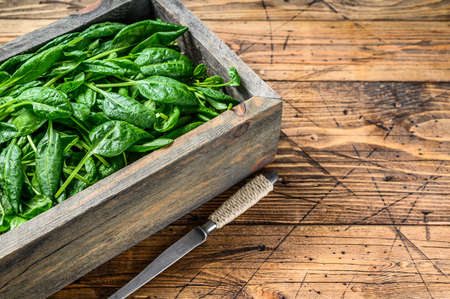 Young baby spinach leaves in a farm wooden box. Natural wooden background. Top view. Copy space