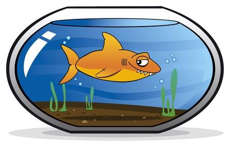 disfrazados: Tibur�n disfrazado de pez dorado