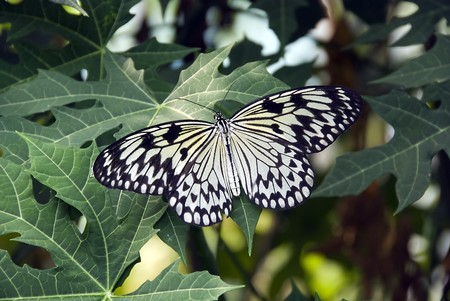 butterfly Stock Photo - 4220504