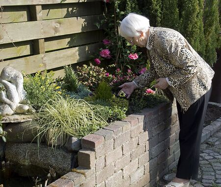 older woman relaxing and working in the garden outiside on a sunny day photo