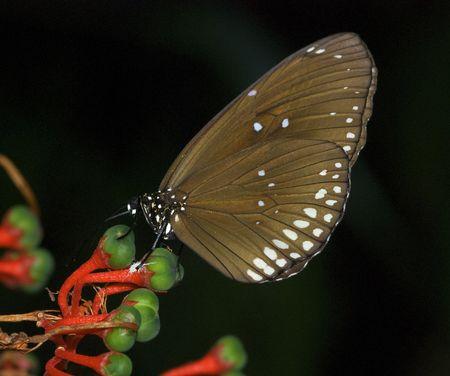 beautiful monarch butterfly on a green leaf in the butterfly garden photo