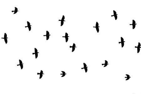 silouette: a lot of black birds flying in the sky Stock Photo