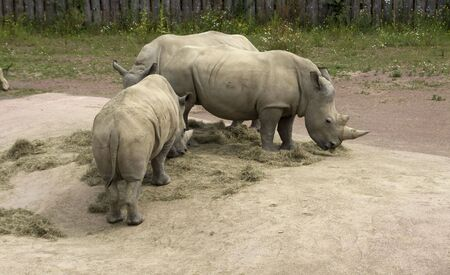 some very big rineceros in the zoo in holland photo