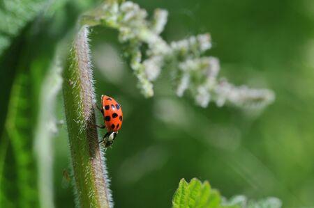 ladybird Stock Photo - 6533670