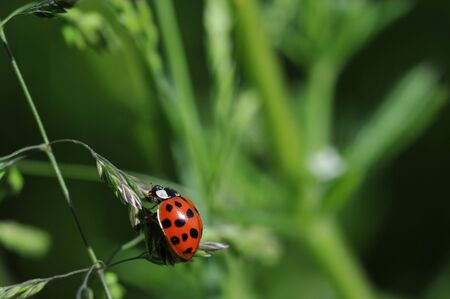ladybird Stock Photo - 6533672