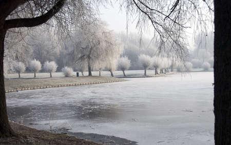 Winter in Holland mit Eis auf den Bäumen Standard-Bild - 8186481