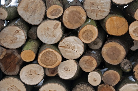 cut trees as a wooden background Stock Photo - 12273631