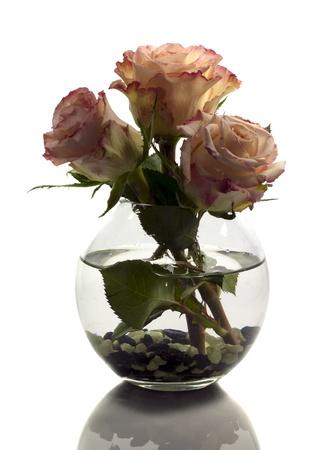 vase with orange roses isolated on white photo