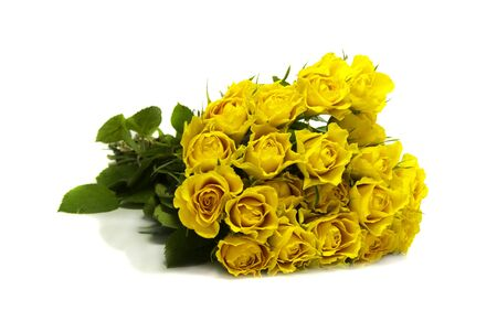 yellow roses on white isolated background photo