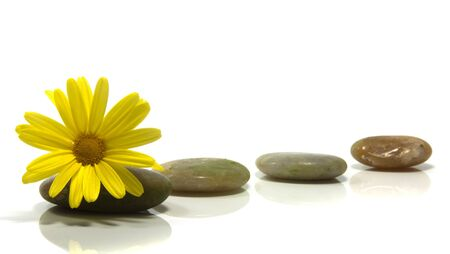 stones isolated on white with yellow flower photo