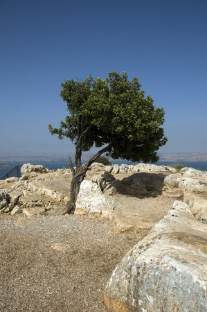 mount of olives: The religious mount tabor in israel where jesus Christ has been
