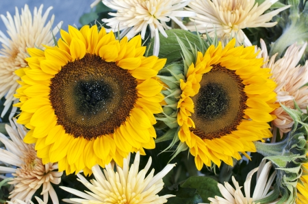 yellow chrysanteum and sunflowers bouquet photo