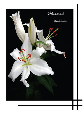 lily condolence card