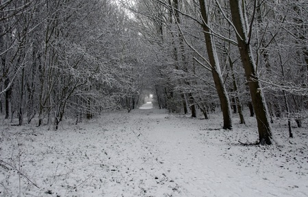 winter landscape in holland in december photo