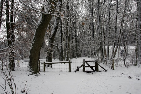 icey: snow in winter in holland