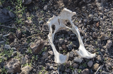 dead dog: part of a dead dog in nature