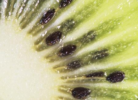 freshest: macro of seeds from the kiwi inside