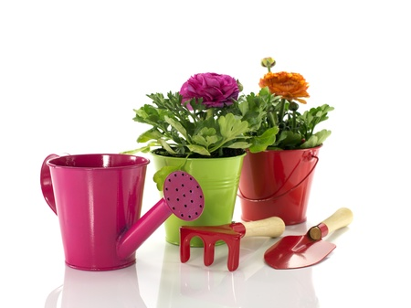 red and green bucket with spring flowers and gardening tools photo