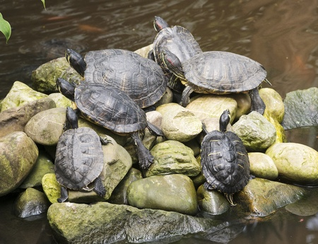 land shell: island in the water with resting turtles