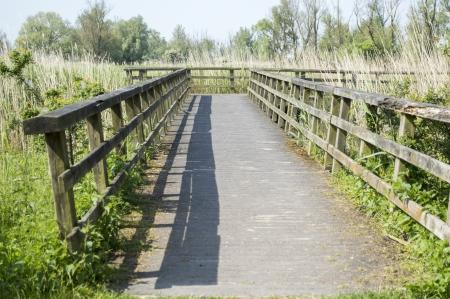 holand: wooden bridge in nature park holland
