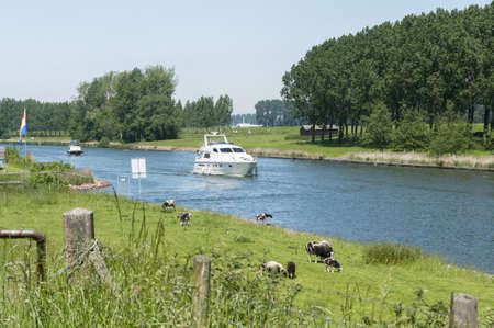 maas: the old maas river in netherlands with boat and cow in the field Stock Photo