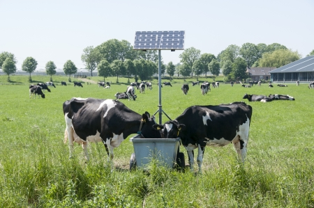 cows drinking with sun energy pannels for heating photo