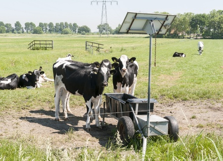 heffer: cows drinking with sun energy pannels for heating Stock Photo