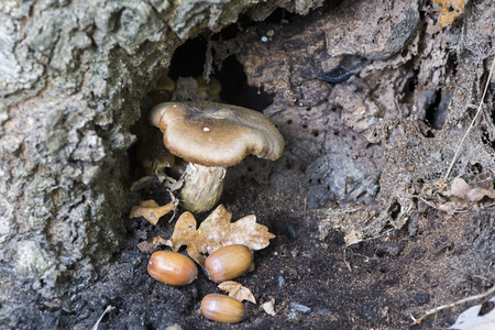 entheogen: small fungus in hole of tree