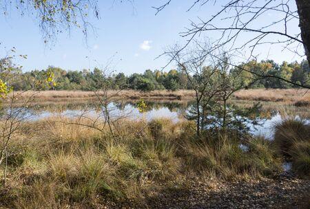 venn: nature area gilderhauser venn in germany Stock Photo