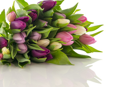 bunch of tulips in pastel isolated on white background photo