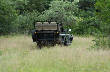 south africa nature: open safari in south africa nature with trees and high grass