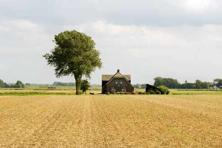 farm with single tree in the wheat wide field in holland