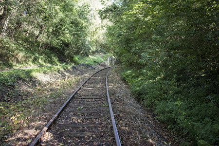 forest railroad: railroad track in the forest