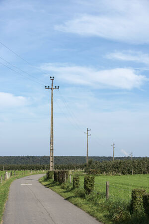 power cables: electricity power cables in nature landscape