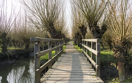 willows: nature area in  holland with willows wooden bridge and small river