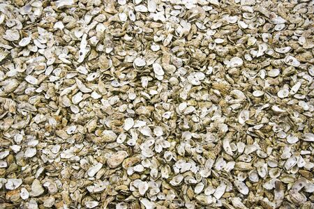 background of big group of oyster shells in holland