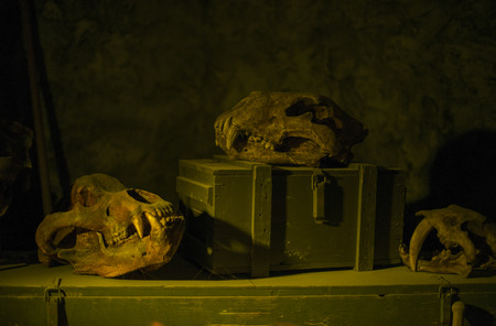 yello: still life of old skull and wooden suitcase