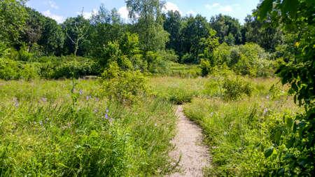 botanica: wild flowers in botanica garden in ruckphen holland