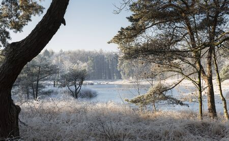 winter landscape in the dutch forest of Goirle  with frozen water and ice on the grass and trees