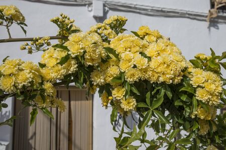 bow with yellow flowers in spain as house entrance 版權商用圖片