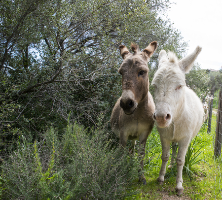 brown and white donkey together