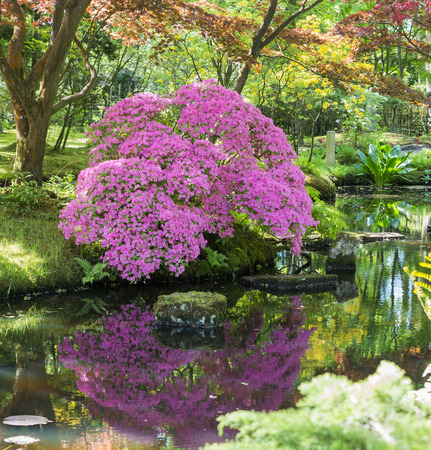 pink azalea with water reflection